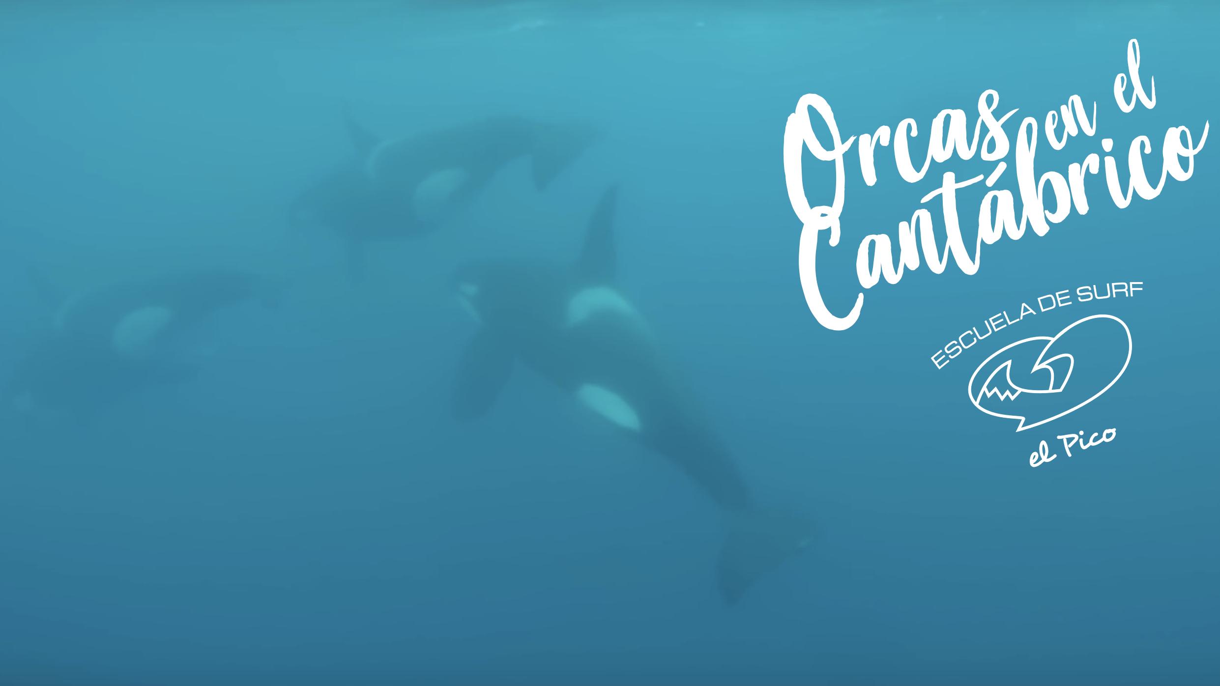 Orcas en el Cantábrico ❤️