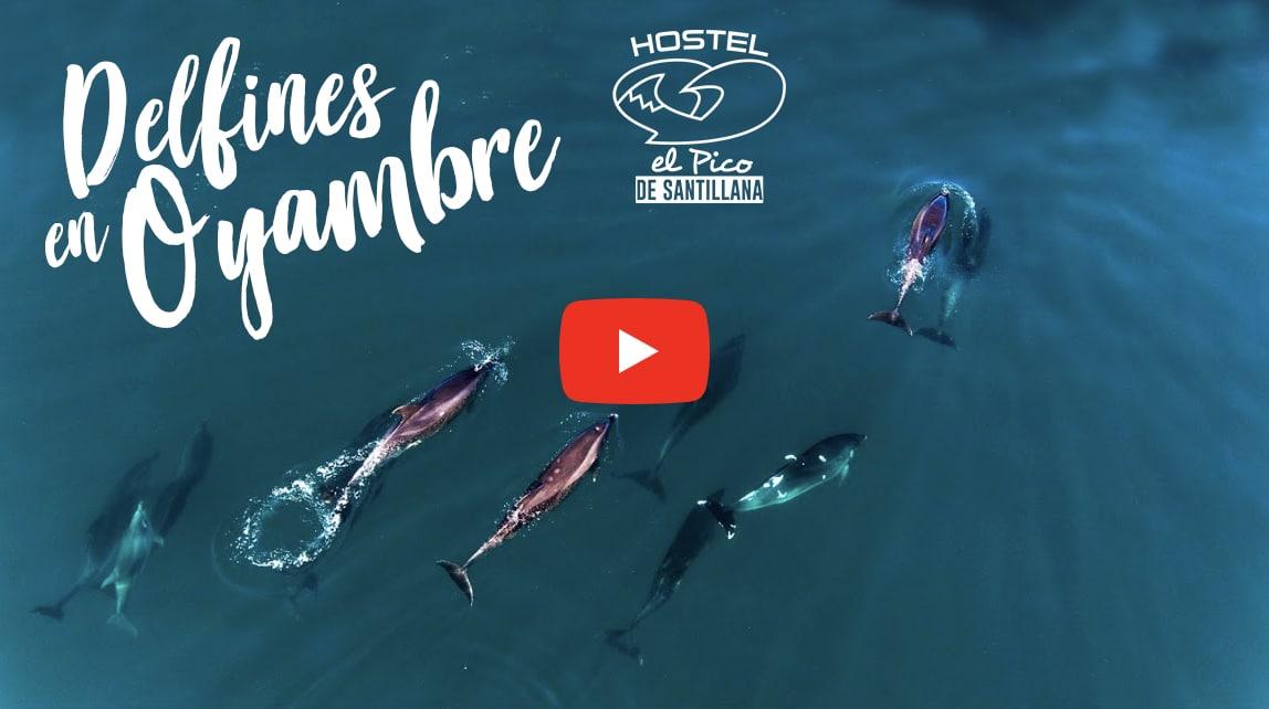 Delfines en Oyambre